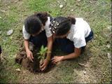 proyectos ambientales